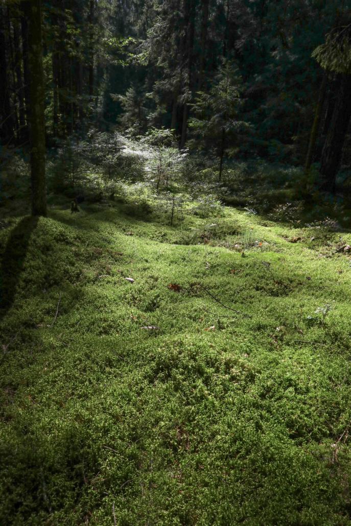 Le sol, camaïeu de verts, est souvent recouvert d'une mousse peuplée d'insectes. Un rayon de lumière survient, un ravissement. […]